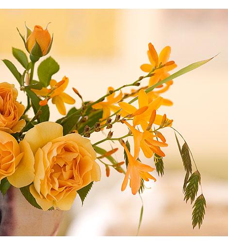 Crocosmia-w-Julia-Child-Roses