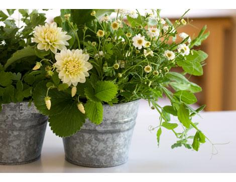 Filler-Greens-for-Rose-Bouquets