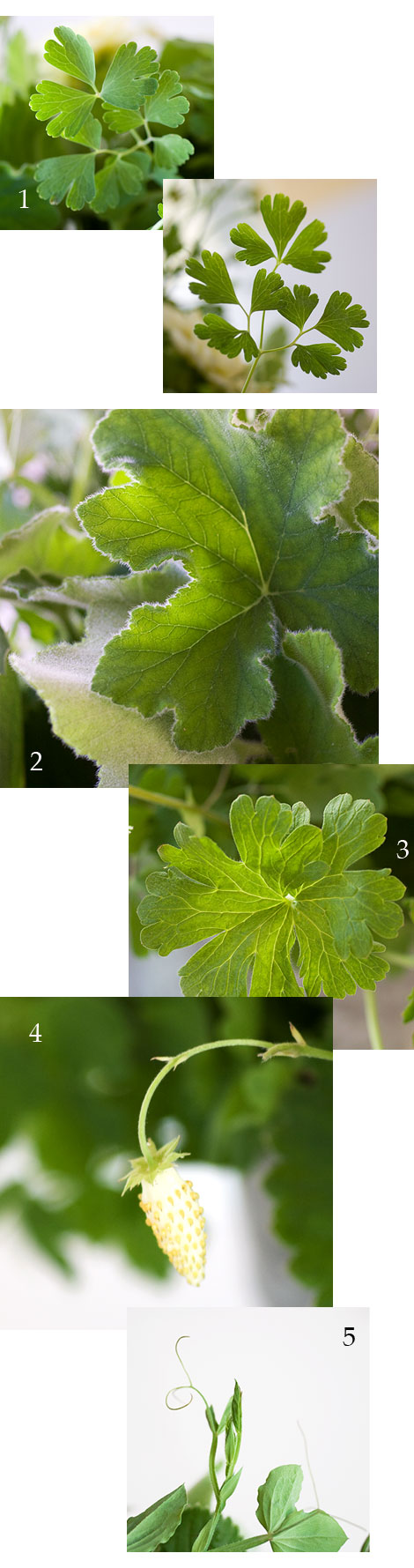 Bouquet-Filler-Greens