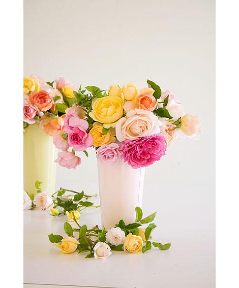 Multi-Colored-Roses
