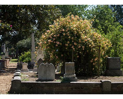 Sacramento-Cemetery-Rose-Garden