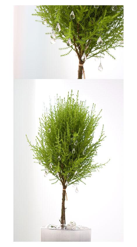 Lime-Cedar-Topiary