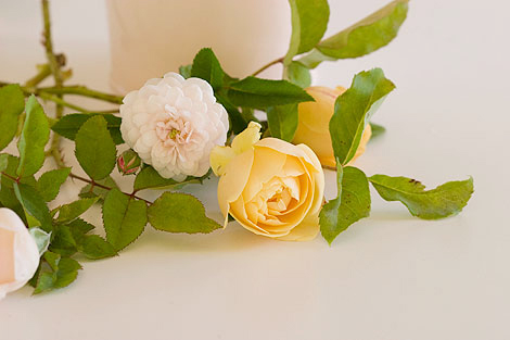 Yellow-&-whit-roses