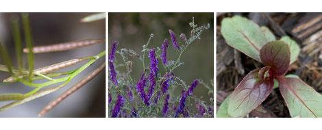 3-weeds