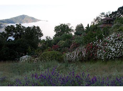 Temple-Rose-Garden