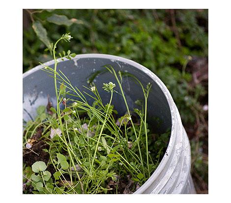 Weed-bucket