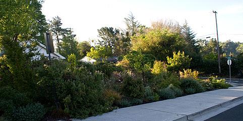 Sidewalk-Rose-Garden
