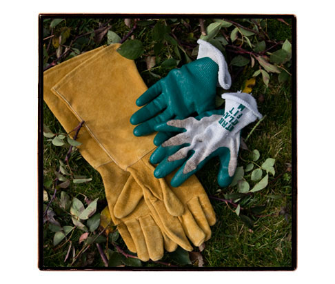 Rose-pruning-gloves