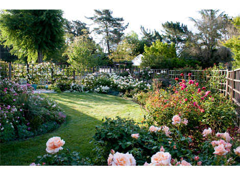 Rose Garden Design larkspur delphinium in a rose garden design marianne and detlef ldke Multi Color Rose Garden