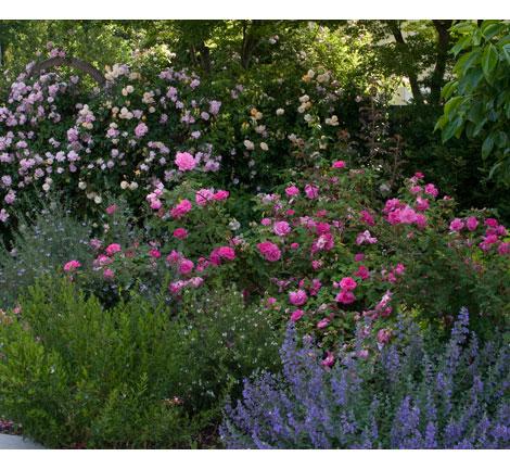 Romantic-rose-garden