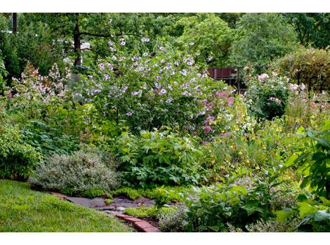 Herbaceous-garden