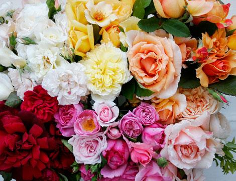 Designing a Hillside Rose Garden Part 1 Rose Notes