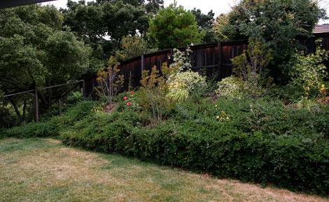 Rose-garden-space