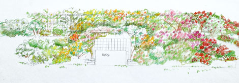 Designing a Hillside Rose Garden Part 1 Rose Notes