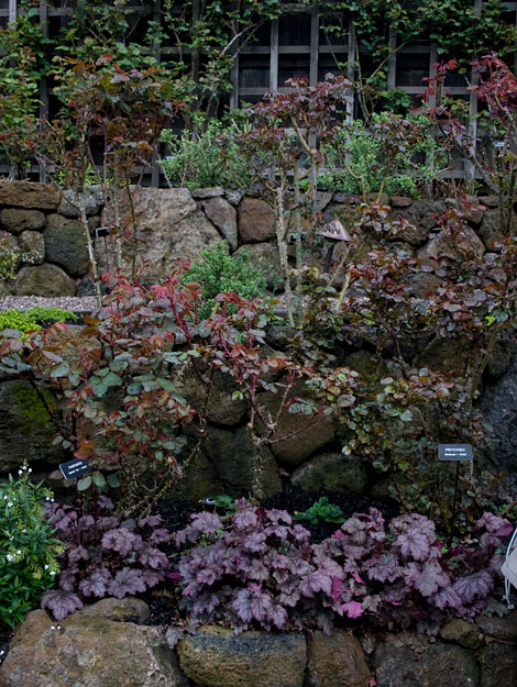 Huchera-under-roses