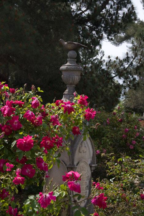 Rose-and-bird-sculpture