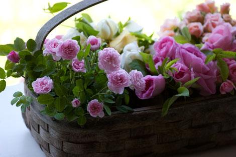De-meaux-rose