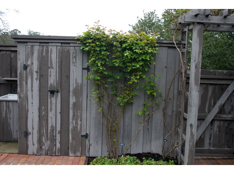 10-after-rose-pruning