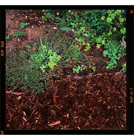 3-mulch-and-weeds