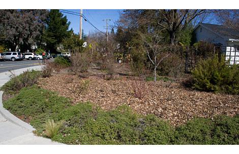 12-leaf-mulch
