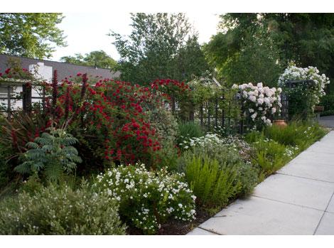 Dramatic-rose-garden