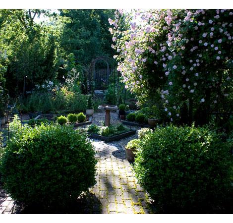 Formal-rose-garden