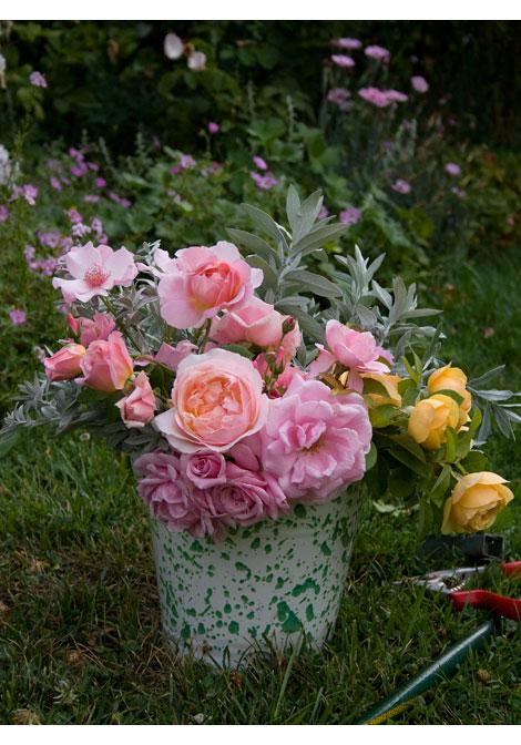 Bucket-of-roses