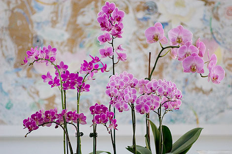 Orchid-display