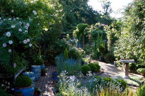 Blue Garden Rose Notes
