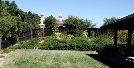 Before-rose-garden