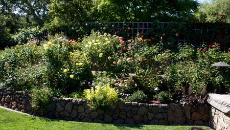 Tiered-rose-garden