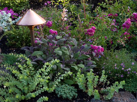 Roses-and-underplantings