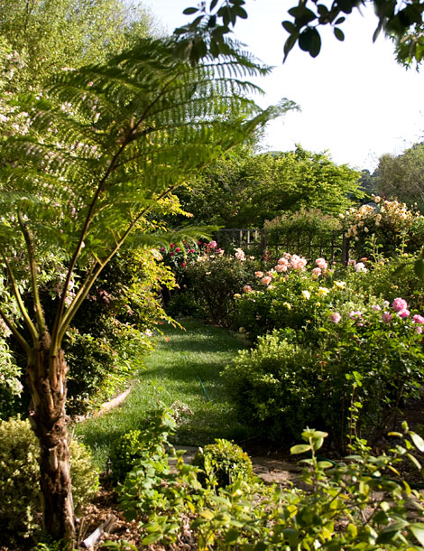 Roses-and-tree-fern