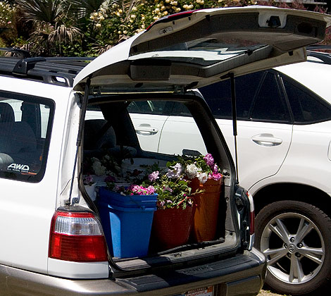 Car-full-of-roses