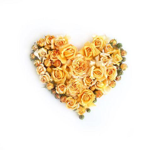 Buff beauty rose heart