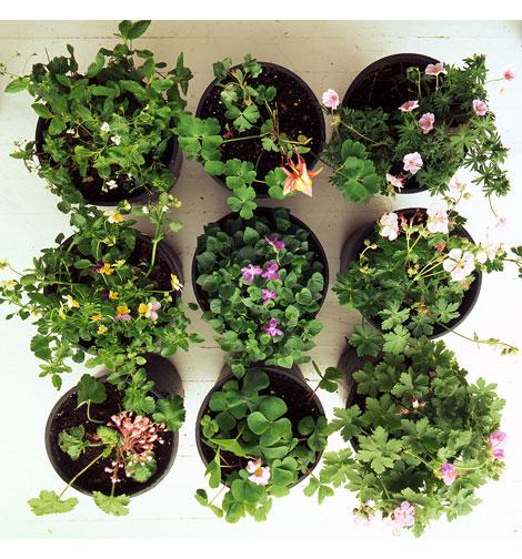 Gallon-plants