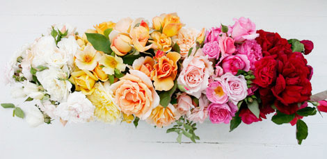 Rose-presentation2