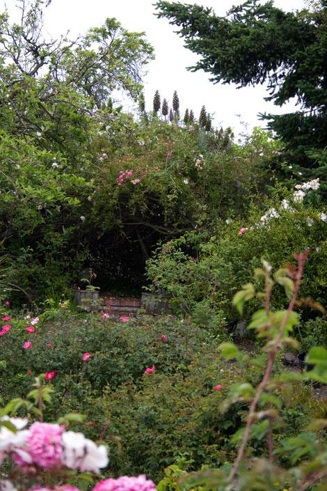 Miriam's-garden
