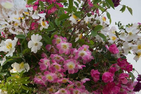 Rose-bouquet-detail
