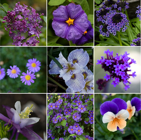 best 25 purple garden ideas on pinterest purple plants purple - Common Purple Garden Flowers