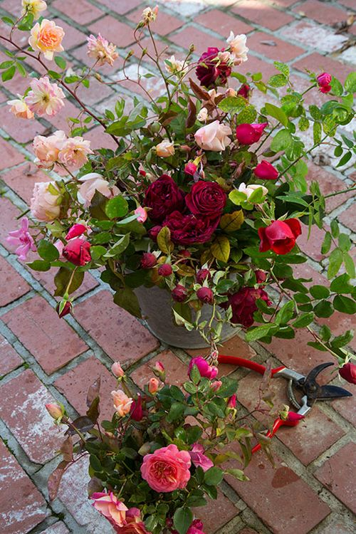 Rose-harvest-on-bricks