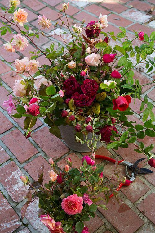 Rose-harvest-on-bricks