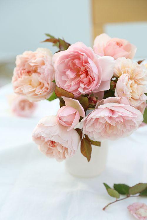 Pink-gruss-an-achen-roses