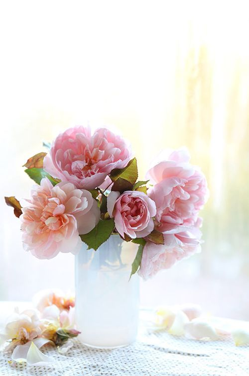 Pale-pink-old-roses