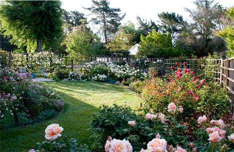 Front-garden-inside-fence