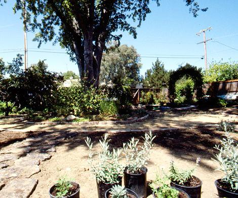 Back-garden-