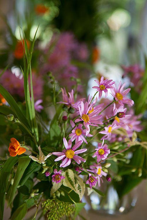 Pink-senecio-bouquet