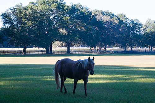 Ocala horse farms