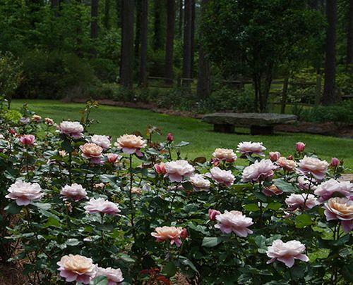 ARS-garden