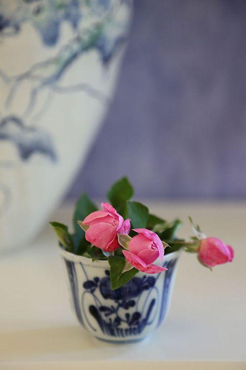 Hermosa-rose-blue